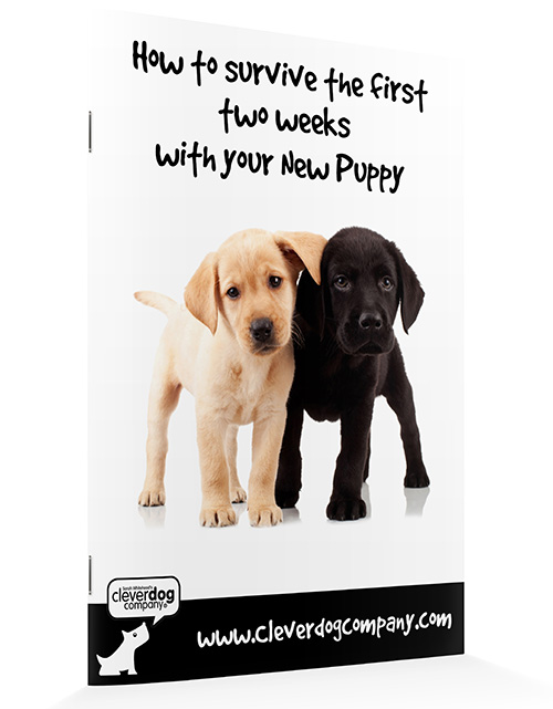 Introducing Your Puppy And Cat Sarah Whitehead S Clever Dog Company